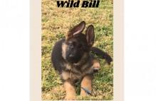 wildbill1_0117_626