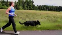 Running shepherd 1