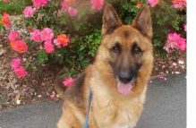 adopt gsd - orion