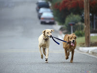 dogs-running-blog