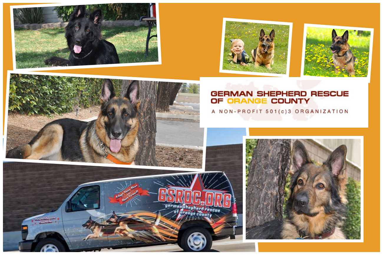 Available Dogs in GSROC care German Shepherd Rescue of Orange County
