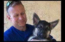 adopt a gsd puppy - sonic