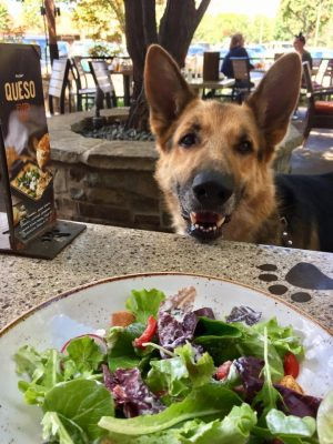 GSD at lunch