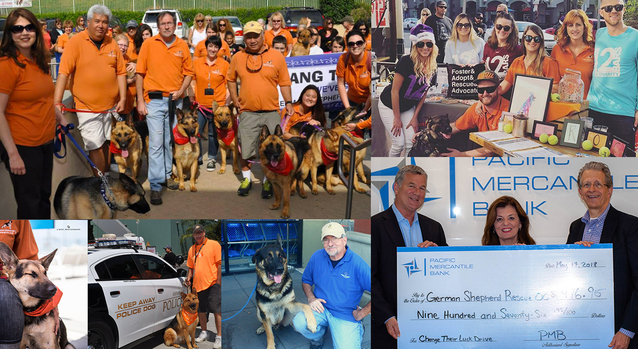 German Shepherd Rescue Orange County Group Volunteering Events