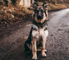 What To Do If You Lose A Dog