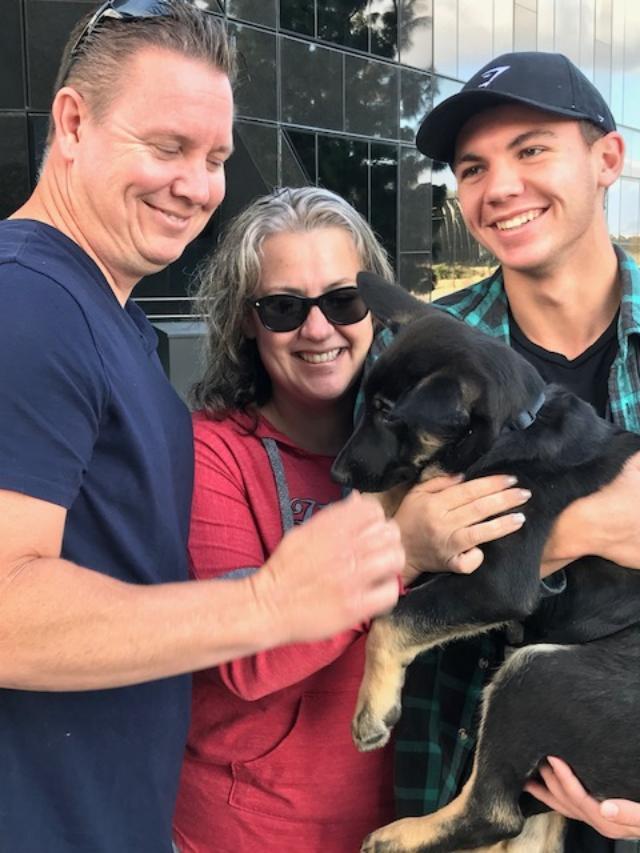adopt a german shepherd - monday