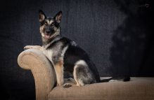 peanut butter adopt german shepherd