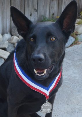FEBRUARY 2020 DOG OF THE MONTH: LOGAN