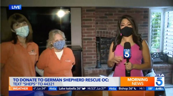 Newport Beach rescue seeking donations for 2 German shepherd puppies with medical needs